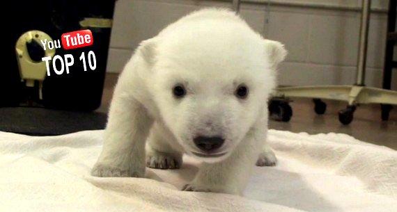 Youtube Lustige Tierfilme
