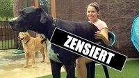 20 Fotos von Hunden, die nicht wissen, wie groß sie wirklich sind