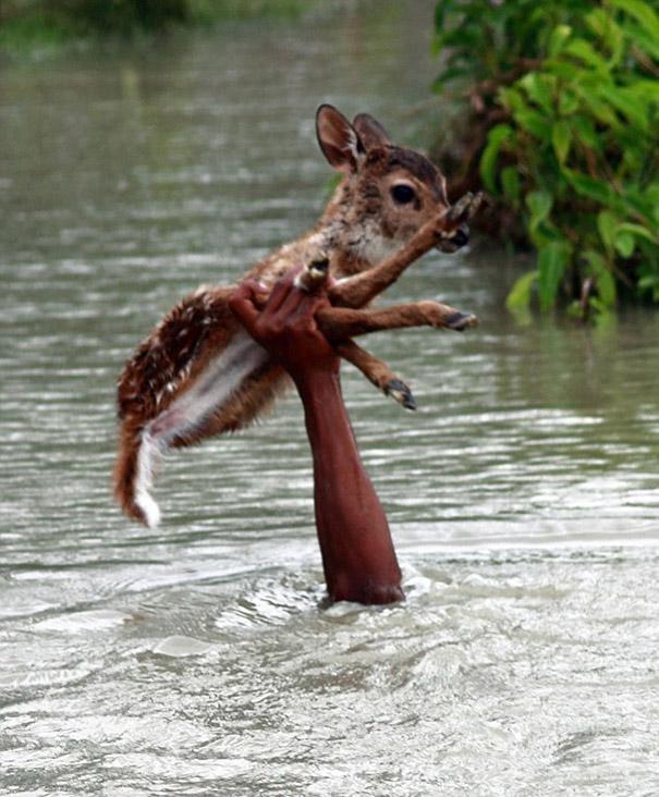Herzerwärmende Rettungsaktion eines Baby Rehs