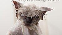 Wasser marsch! 10 Fotos von gebadeteten Katzen, die sich mit ihrem Schicksal abgefunden haben