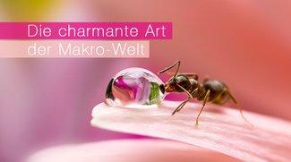 Die charmante Art der Makro-Welt