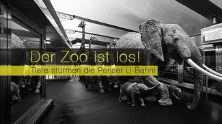 Der Zoo ist los! Tiere stürmen die Pariser U-Bahn!