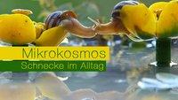 Makro-Fotografien des Mikrokosmos einer Schnecke (im Alltag)