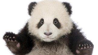 Unflod Baby Panda: Malware attackiert gejailbreakte iPhones und iPads