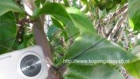 Galaxy S5 Zoom: Geleaktes Bild verrät Kamera-Spezifikationen