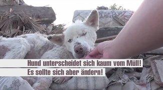 Hund unterscheidet sich kaum vom Müll! Es sollte sich aber ändern!