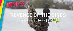 Die Rache der Angry Birds: Wenn Vögel zu Tätern werden