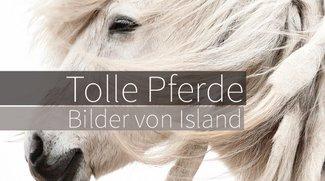 Pferde in beeindruckender Art und Weise fotografiert!