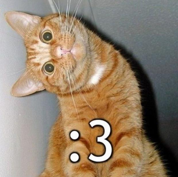 Katze bedeutung herzaugen emoji mit Herz