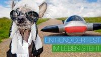 Chini – Ein Hund der fest im Job und Leben steht