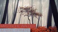 Mystische Wälder im Nebel Spaniens - Guillermo Carballa