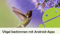 Vögel bestimmen mit App: So geht's auf Android