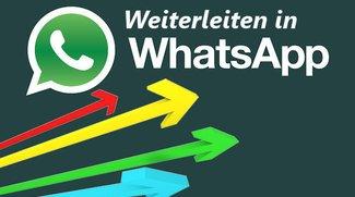 In WhatsApp weiterleiten: Nachrichten, Bilder, Chats