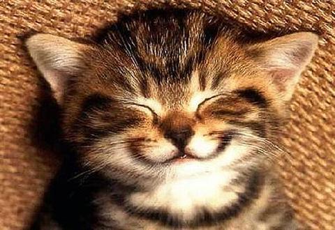 Smiley bedeutung 3 Smiley COOL