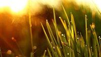 Sonnenuntergang und bunte Zebras - Bild-kritik + BONUS VIDEO