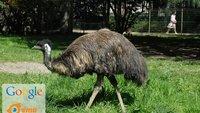 Google kauft Emu: Intelligenter Messenger könnte in Hangouts integriert werden