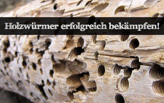 Ratgeber: Holzwurm bekämpfen - die besten Tipps!