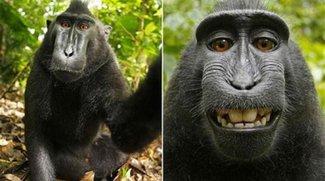 Wenn Affen Selfies machen, gehören die Bilder der Allgemeinheit
