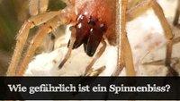 Wie gefährlich ist ein Spinnenbiss in Deutschland?