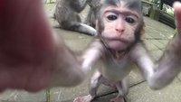 13 beeindruckende GoPro-Bilder