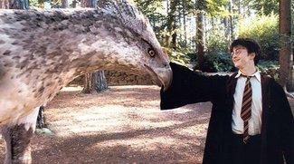 Lego Movie-Filme & Harry Potter-Spin-offs: Kinostarts stehen fest