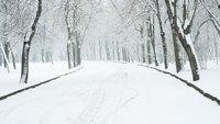Ist Streusalz verboten? Schnee und Eis von Gehwegen im Winter entfernen