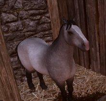 Dragon Age - Inquisition: Alle Reittiere - Pferde, Hirsche, Dracolisken und Exoten