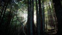 Wallpaper der Woche: Baumdickicht und Licht [Download]