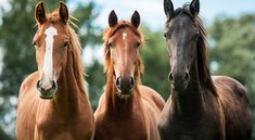Minecraft: Pferde finden, zähmen & reiten - Sattel craften?
