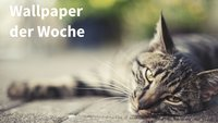 Wallpaper der Woche: Faule Katze [Download]