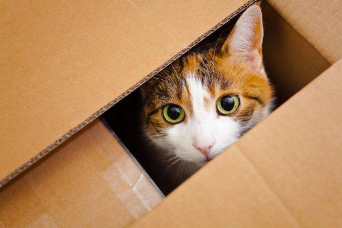 Schrödingers Katze: Erklärung für Dummies
