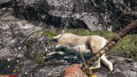 Far Cry 4: Bharal-Location – so kann man die Felle finden