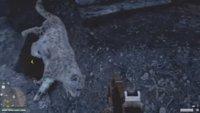 Far Cry 4: Schneeleopard finden - Fundort und Location für die benötigten Felle