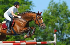 Pferdesport-Weltfest 2015 in...