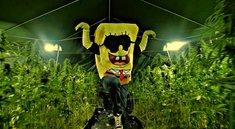Wer ist SpongeBOZZ wirklich? Die volle Wahrheit