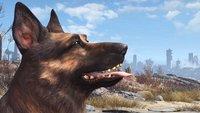 Fallout 4: Stirbt der Hund als Dogmeat?
