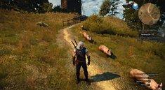 """The Witcher 3: DLC-Quest """"Gold der Trottel"""" finden"""