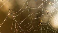 Mücken vertreiben: Ein Blick ins Arsenal der besten Waffen & Defensiv-Strategien - Mückenmord Reloaded!
