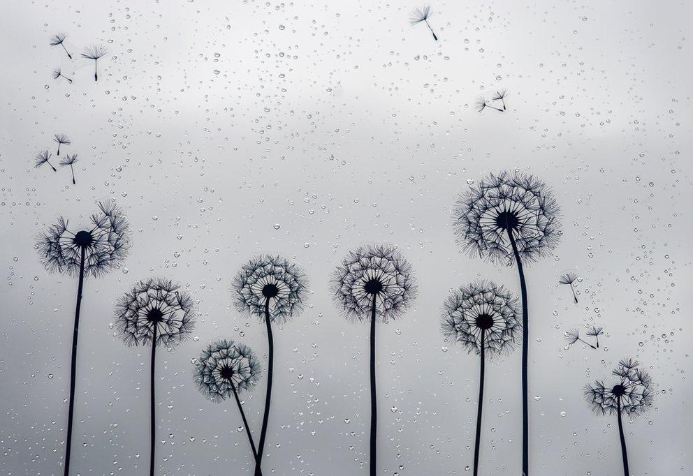 Tattoo Pusteblume Lasst Blumen Sprechen Originelle Pusteblumen