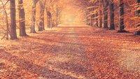 Herbstlieder für den Kindergarten und für Erwachsene