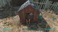 Fallout 4: Begleiter wiederfinden, wechseln und ausrüsten - so verwaltet ihr eure Companions