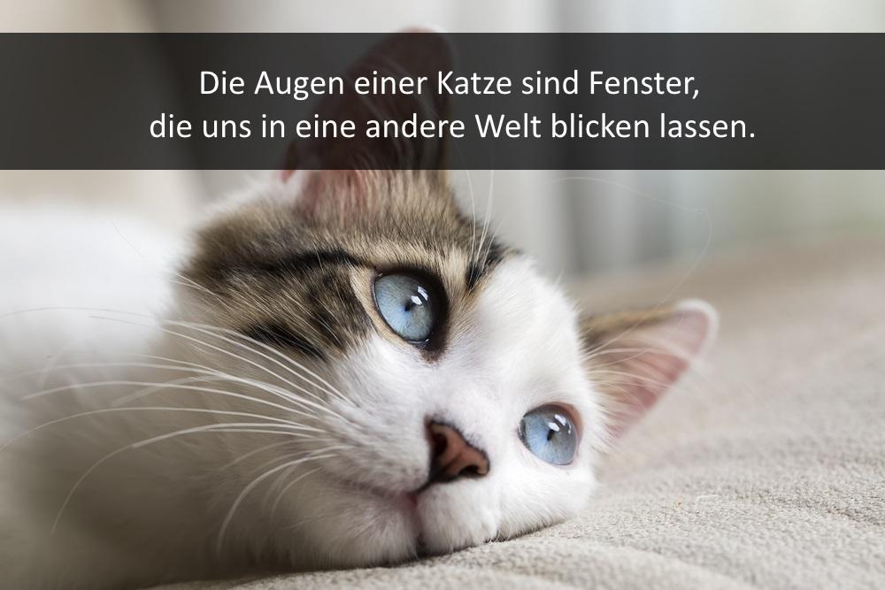 Lustige Kurze Katzenspruche Fur Facebook Whatsapp Und Co