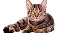 Lustige, kurze Katzensprüche für Facebook, WhatsApp und Co.