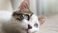 Warum haben Katzen Angst vor Gurken?