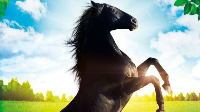 Pferde Filme Stream