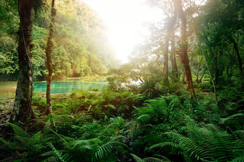 Dschungelcamp Fake Drehort Im Tropical Islands Und Andere