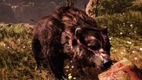 Far Cry Primal: Großen Narbenbär zähmen - Video mit Walkthrough