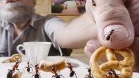 Ameisen in der Küche: 5 Mittel, die helfen - ohne giftige Chemie!
