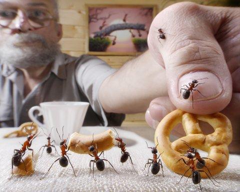 Ameisen in der Küche: 5 Mittel, die helfen – ohne giftige Chemie! – GIGA