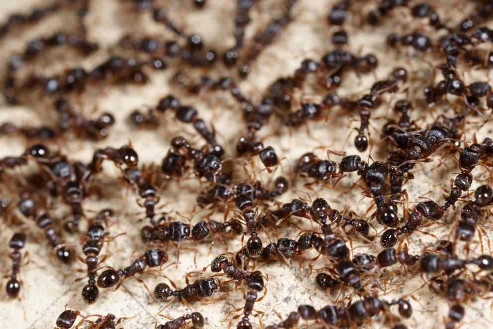 ameisen in der k che 5 mittel die helfen ohne giftige. Black Bedroom Furniture Sets. Home Design Ideas